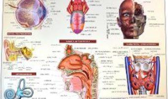 Cartea Anatomia omului – plansa nr.1 (download, pret, reducere)