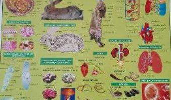Download  Plansa Biologie scolara – Zoologie PDF Online