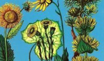 Download Dictionar botanic – Maria Antoaneta Vintilescu, Silvia Popescu PDF Online