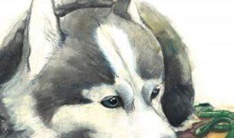 Cartea Lectii de la Sami – Alec Blenche, Mirtylle S. (download, pret, reducere)