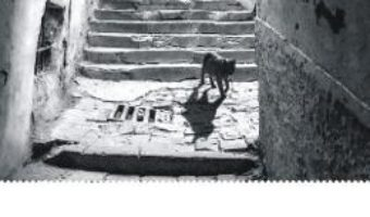 Cartea Ciuma – Albert Camus (download, pret, reducere)