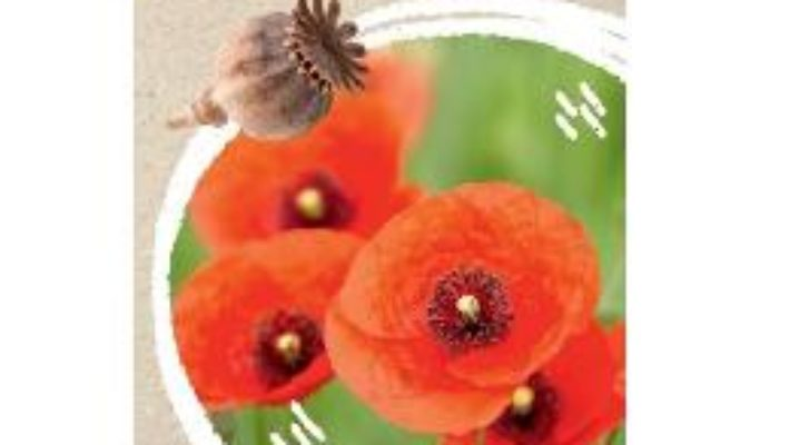 Cartea Micul biolog: Flori – Anita van Saan (download, pret, reducere)
