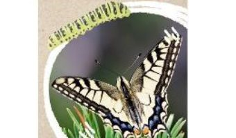 Cartea Micul biolog: Insecte – Anita van Saan (download, pret, reducere)