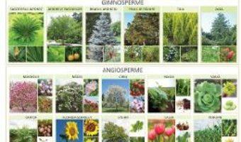 Cartea Plansa Gimnosperme si Angiosperme – Florica Alexandrescu (download, pret, reducere)