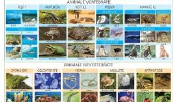 Cartea Plansa Animale vertebrate si nevertebrate – Florica Alexandrescu (download, pret, reducere)