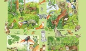 Cartea Plansa: Fauna si flora din padure (download, pret, reducere)