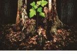 Cartea Trauma si perturbari ale atasamentului – Ioana M. Neagoe (download, pret, reducere)