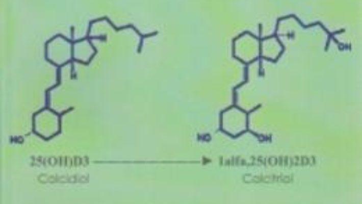 Cartea Sistemul Endocrin Al Vitaminei D Vol.2 – Doru Dejica, Valeria Dejica (download, pret, reducere)