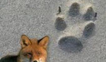 Animale si urmele lor – Lars-Henrik Olsen PDF (download, pret, reducere)